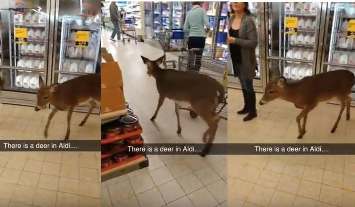 Ελάφι εθεάθη στο σούπερ μάρκετ να κάνει τα…ψώνια του! | Newsit.gr