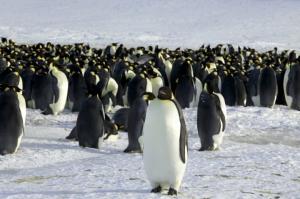 Βρέθηκαν απομεινάρια γιγάντιου πιγκουίνου – Είχε το μέγεθος ανθρώπου!