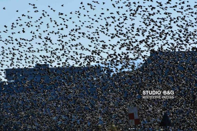 Μαύρο τεράστιο πουλί
