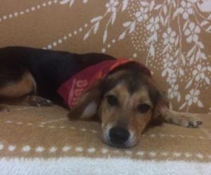Πάτρα: Έδεσαν με σύρμα και βασάνισαν άγρια σκυλίτσα! Νέο περιστατικό κακοποίησης ζώου [pics]