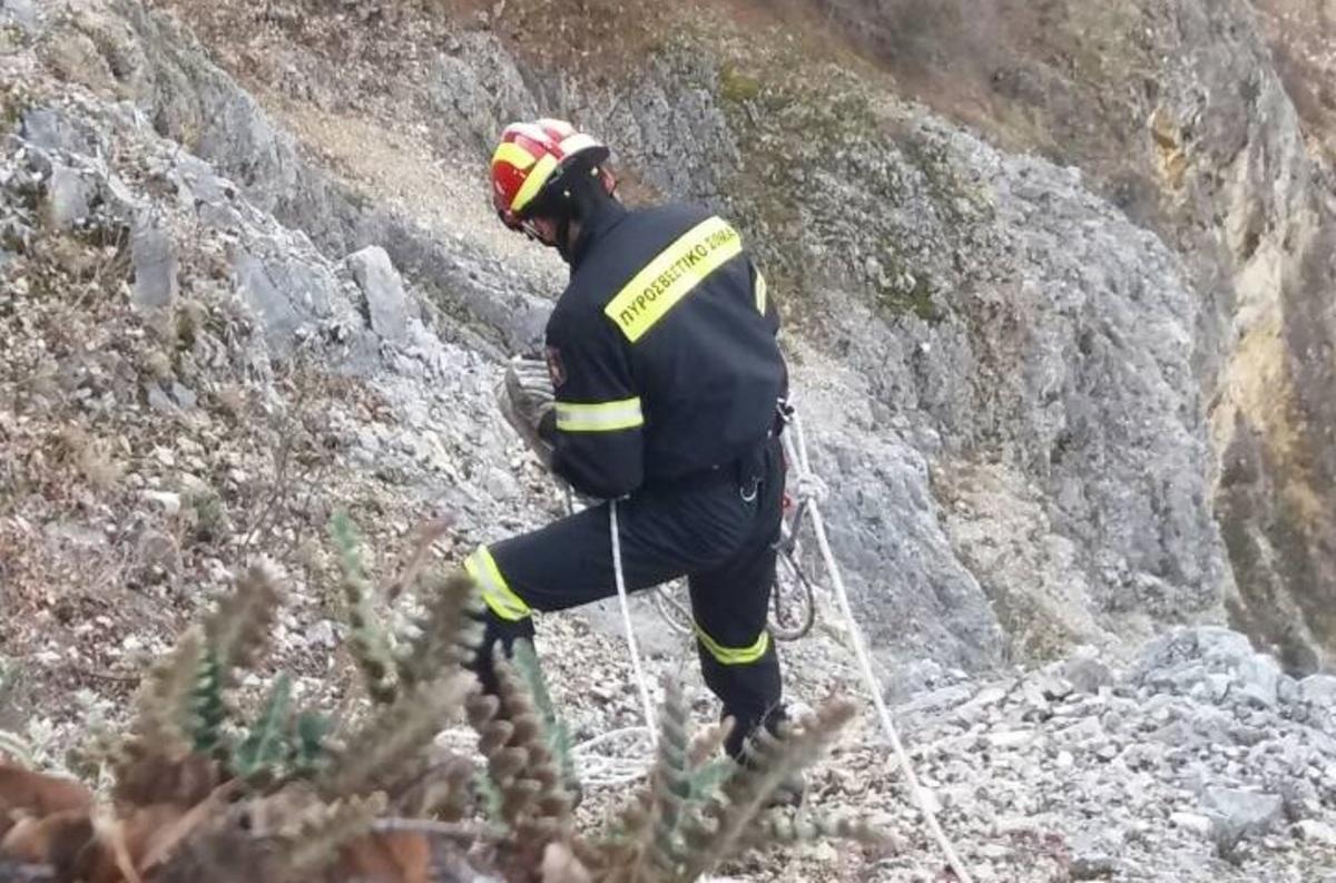 Δύσκολη επιχείρηση για τη διάσωση σκύλου στην Κοζάνη [vid] | Newsit.gr