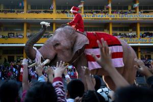 Ο Άγιος Βασίλης είναι… ελέφαντας! [pics]