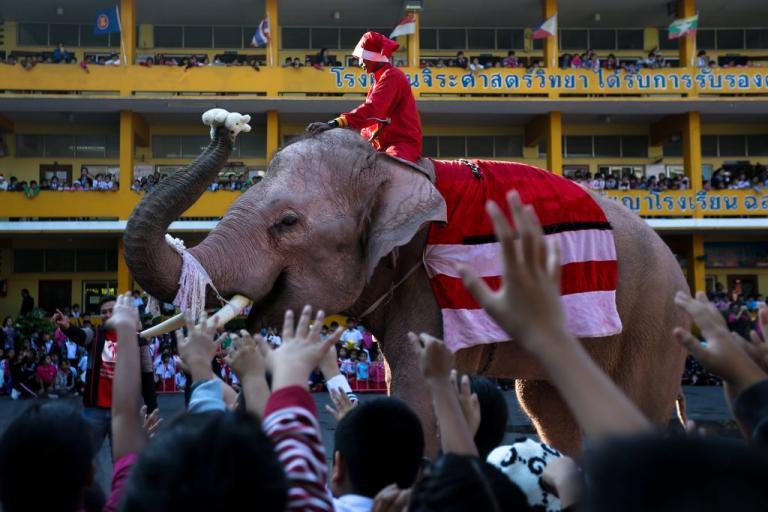 Ο Άγιος Βασίλης είναι… ελέφαντας! [pics] | Newsit.gr
