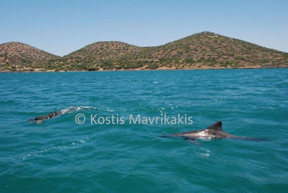 ΦΩΤΟ από cretalive.gr