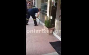 Λάρισα: Πυροσβέστης αποκεφαλίζει φίδι με τα χέρια! [vid]