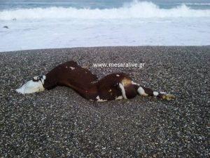 Κρήτη: Περπατούσαν στην παραλία και προσπαθούσαν να πιστέψουν αυτό που ξέβρασε η θάλασσα – Δείτε φωτό!