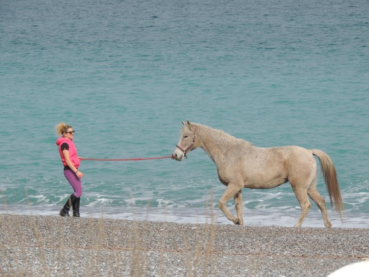 «Υιοθέτησε» τα άλογα και κέρδισε την ελευθερία! | Newsit.gr