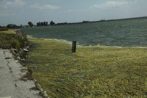 Αιτωλικό: Πράσινη η λιμνοθάλασσα – Αυτές είναι οι εικόνες που αντίκρυσαν κάτοικοι της περιοχής [pics]