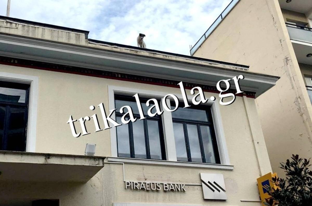 φωτό από trikalaola