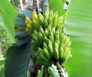 Η γεωργία ευθύνεται για το ένα τρίτο των «αερίων του θερμοκηπίου»