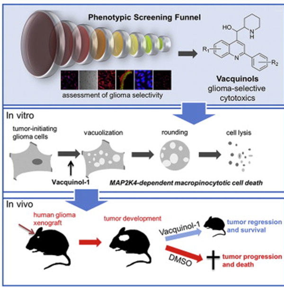 """Σπουδαία ιατρική ανακάλυψη; Νέος μηχανισμός καταπολέμησης του καρκίνου – Σταμάτησαν την ανάπτυξη των όγκων """"ανατινάζοντας"""" τα καρκινικά κύτταρα!"""