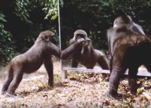 Έβαλαν καθρέφτη μπροστά σε άγρια ζώα. Η αντίδραση τους συναρπάζει! [vid]
