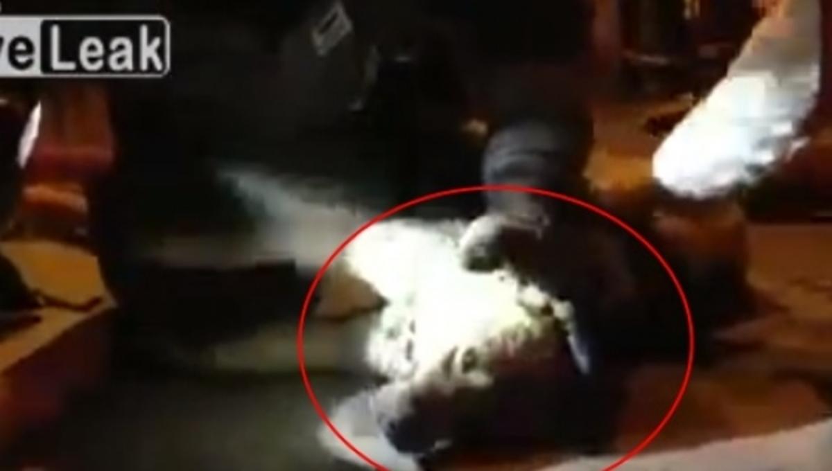 Τεχνητή αναπνοή από πυροσβέστη σε νεκρό σκύλο – Δείτε Βίντεο