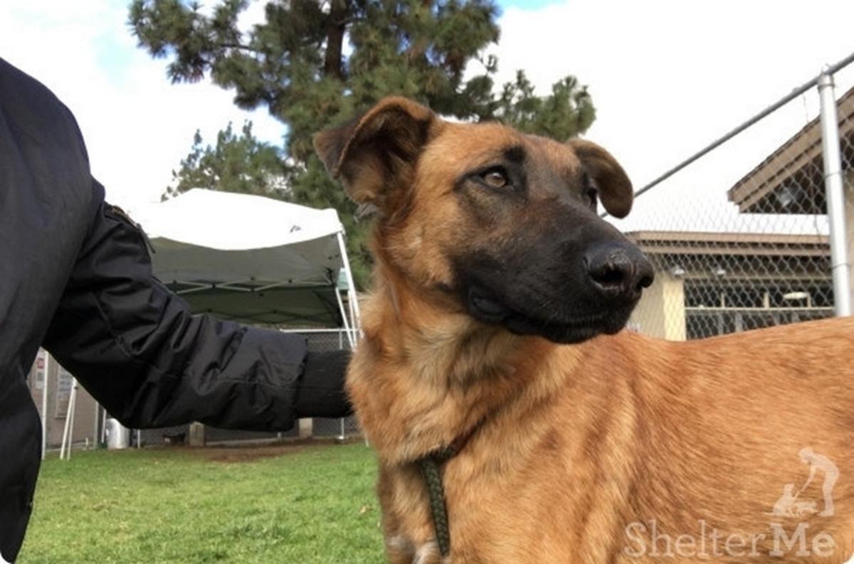 Ραγίζει καρδιές η Zuzu! Είδε την οικογένειά της να υιοθετεί άλλο σκύλο [vid]