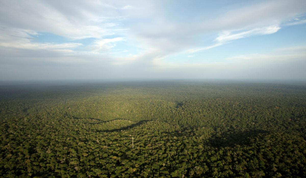 Tο Δάσος του Αμαζονίου: ΦΩΤΟ REUTERS
