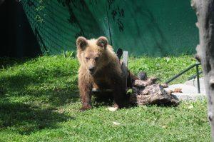 """Το ανάπηρο αρκουδάκι του Αρκτούρου """"στέλνει"""" γράμμα στον Άγιο Βασίλη [vid]"""