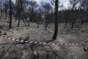 Αλόννησος: 30 στρέμματα δάσους έγιναν στάχτη