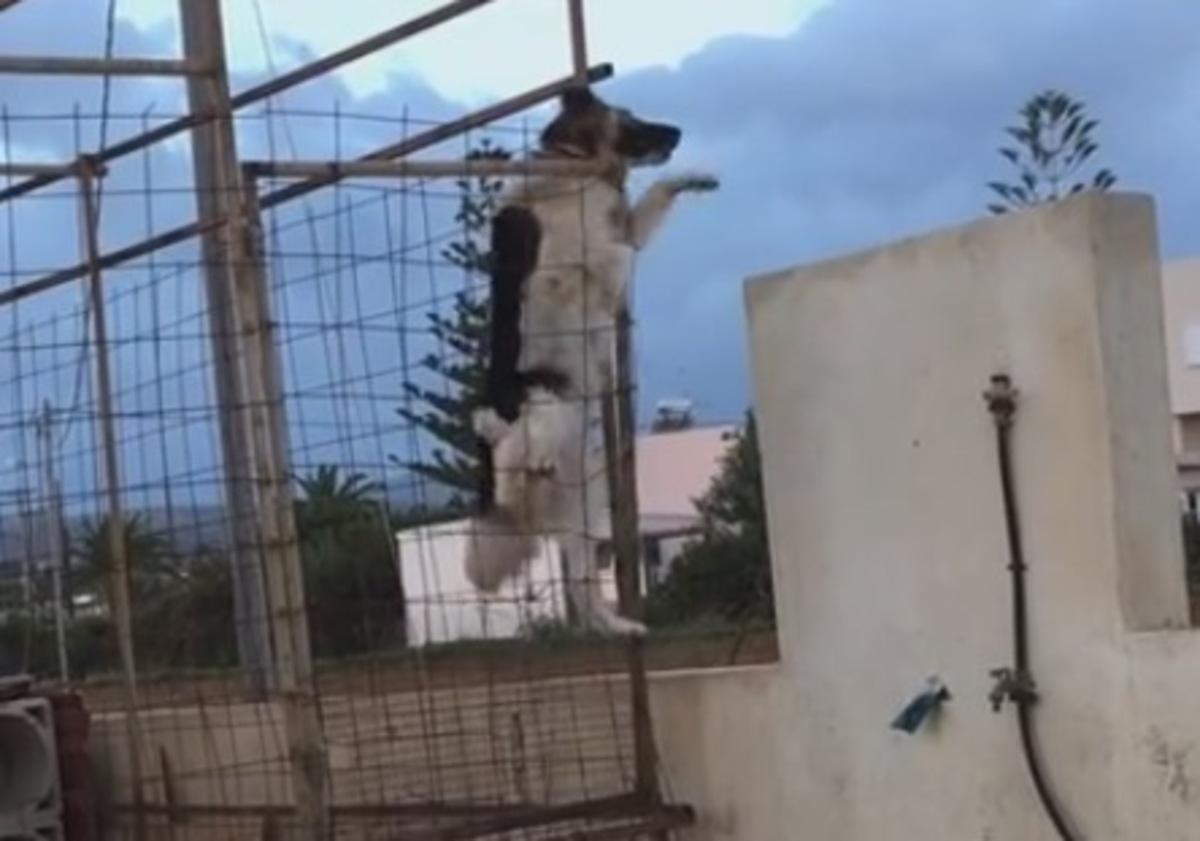 Ρέθυμνο: Ο σκύλος που έγινε viral – Δείτε πως φτάνει κοντά στην αγαπημένη του (Βίντεο)!