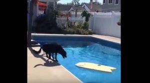 Viral: Πανέξυπνο σκυλάκι πιάνει τη μπάλα χωρίς να βραχεί!