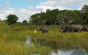 """Μάχη ζωής και θανάτου! Κροκόδειλος """"γραπώνει"""" ελέφαντα από την προβοσκίδα! [vid]"""