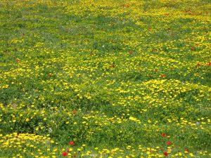 Πανηγύρι της Φύσης στο Δήμο Φιλοθέης-Ψυχικού