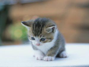 Τρίκαλα: «Απάνθρωποι…» έριξαν γατάκι μέσα σε γραμματοκιβώτιο!
