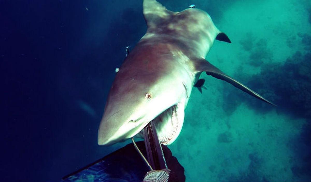 Σοκαριστικό βίντεο: Καρχαρίας επιτίθεται σε δύτη – Δείτε τι έγινε!