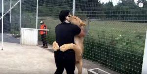 Ξανασμίγει με το λιοντάρι που έσωσε – Δείτε πώς τον ευχαριστεί! [vid]