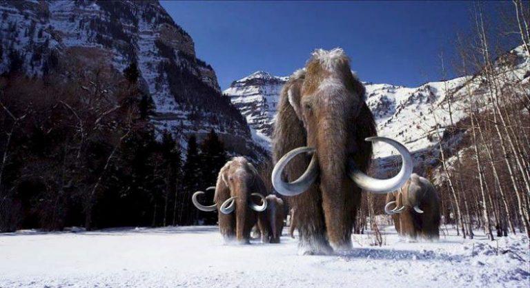 """Η επιστροφή των… μαμούθ! Έγινε το πρώτο """"βήμα"""""""