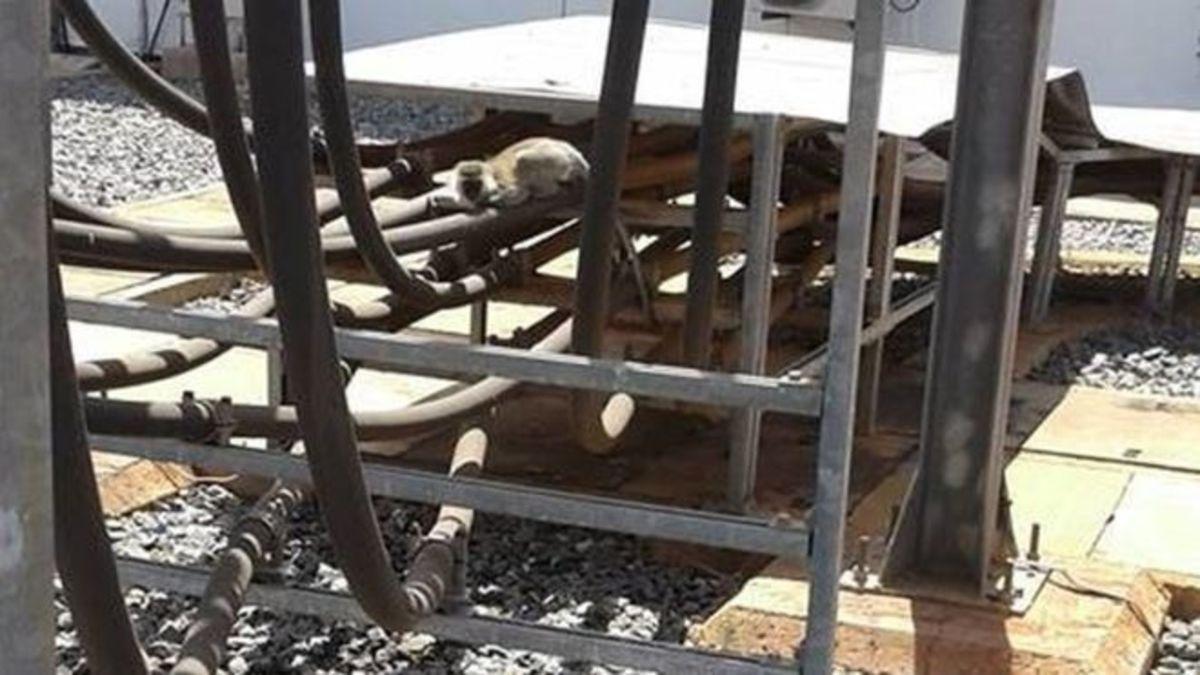 Μια μαϊμού προκάλεσε μπλακάουτ σε όλη την Κένυα!
