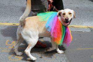 5 επισημάνσεις για το Pride που γιορτάσαμε (+ 1 όχι για το Pride)