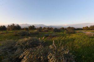 Ηράκλειο: Του έκανε παρατήρηση και την επόμενη μέρα είδε αυτές τις εικόνες στο χωράφι του [pics]