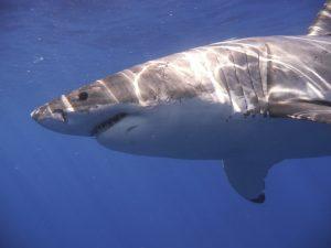 Γλίτωσε από τα σαγόνια του καρχαρία – Τρομακτικά τραύματα [pic]