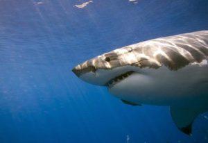 Οι οικογενειακές διακοπές βάφτηκαν με αίμα – Τον σκότωσε καρχαρίας