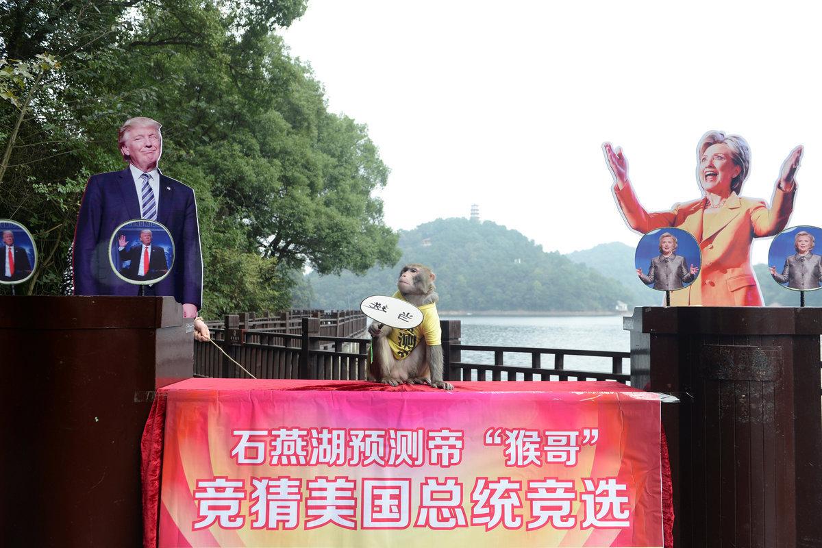 """ΗΠΑ: Θα κερδίσει ο Τραμπ! Ο πίθηκος… προφήτης """"μίλησε"""" [pics]"""