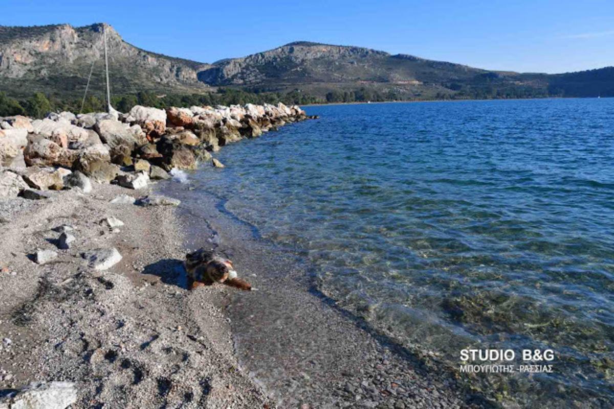 Ναύπλιο: Νεκρή θαλάσσια χελώνα στην παραλία Καραθώνας [vid]
