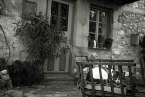 Μεσσηνία: Αιχμάλωτη δίπλα από το σπίτι της – Η απίστευτη περιπέτεια γυναίκας!
