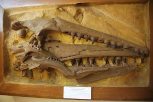 Δέος! Ανακλύφθηκαν απολιθωμένα αποτυπώματα δεινοσαύρων 100 εκατομμυρίων ετών στην Κίνα!