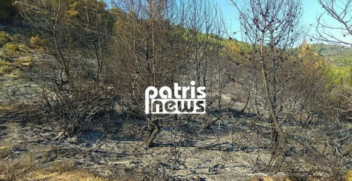 Αμαλιάδα: Κάηκαν 15 στρέμματα δάσους από τη φωτιά στο Γεράκι