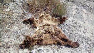 Καστοριά: Έπεσαν πάνω σε αυτή την εικόνα σε παραποτάμια περιοχή του Αλιάκμονα [pics]