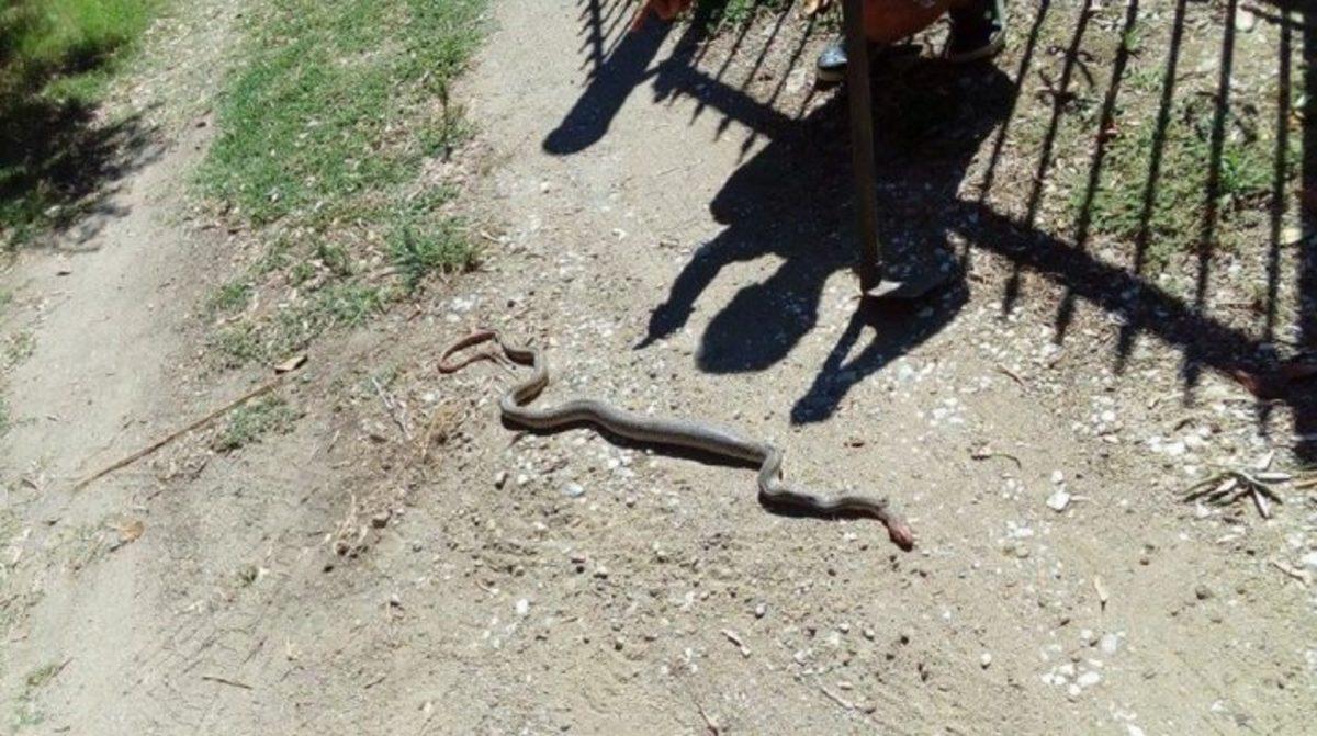Λάρισα: Βρήκαν τεράστιο φίδι στην αυλή τους! [pics]