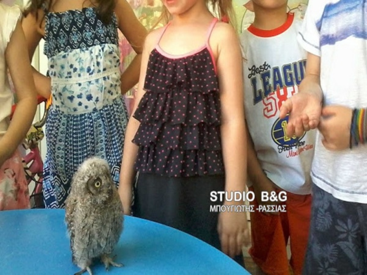 Κουκουβάγια βρήκε… καταφύγιο σε παιδικό σταθμό του Ναυπλίου [pics]