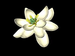 Πώς μπορεί να ήταν το πρώτο λουλούδι της Γης;