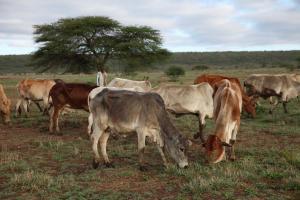 Επιταχύνεται η «εξόντωση» της άγριας ζωής