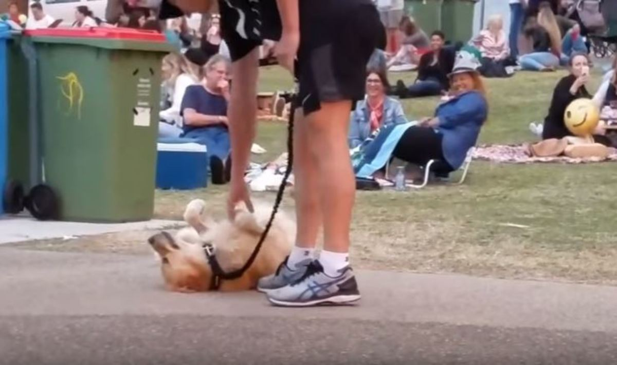 Αυτός ο σκύλος αρνείται να φύγει από το πάρκο με τον πιο χαριτωμένο τρόπο! [vid]