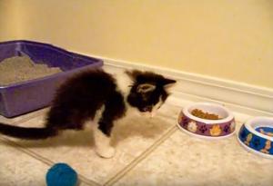 Το γατάκι που γεννήθηκε με δύο άκρα