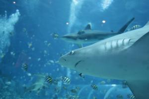 Τι είναι πιο πιθανό; Ο θάνατος από αστεροειδή ή από καρχαρία;