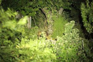 Γιάννενα: Έριξε φως με το κινητό του τηλέφωνο και τράβηξε αυτές τις εικόνες στο δάσος [vid]
