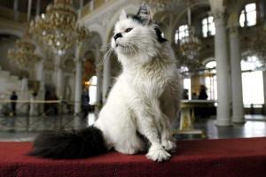 Ρωσία: Πέθαναν διάσημες γάτες του Ερμιτάζ