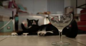 Γιατί να πίνετε μόνοι σας αφού υπάρχει κρασί για γάτες